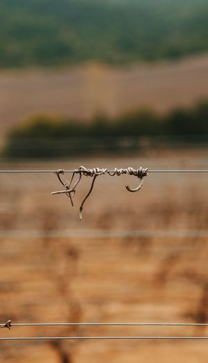Close-up of wire fence