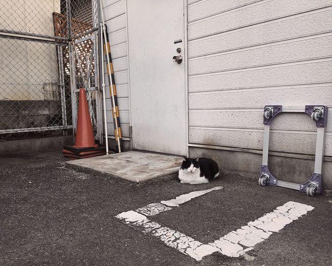 Dog on cobblestone street