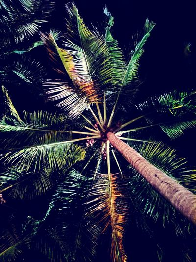 Low angle view of palm trees at night
