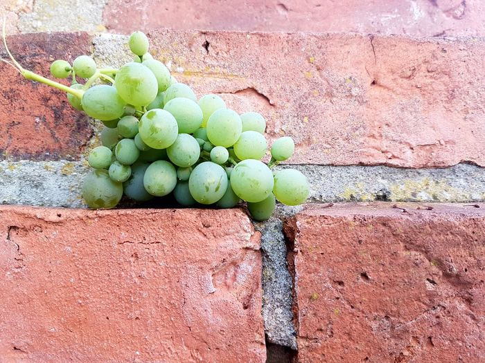 Grapes Grape Wine Winegrapes Wine Grapes Green Grapes Fruits Fruit Photography Fresh Produce Day Green Color No People Nature Food And Drink Healthy Eating Outdoors Fruit Food Freshness Wall - Building Feature