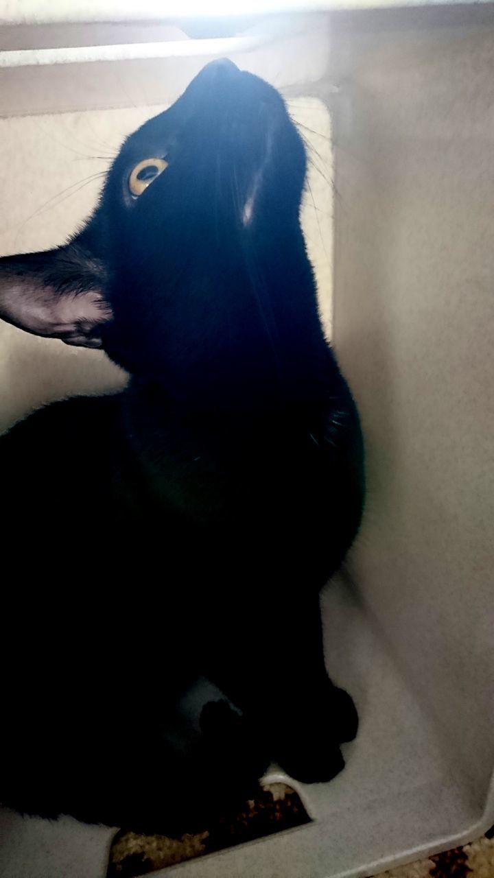 CLOSE-UP OF BLACK DOG ON FLOOR IN SUNLIGHT