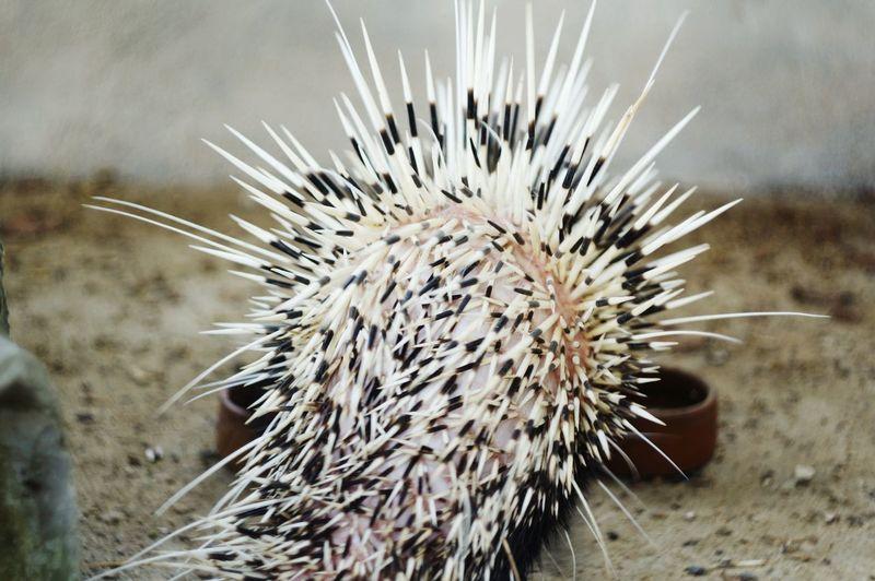 Close-up of cactus