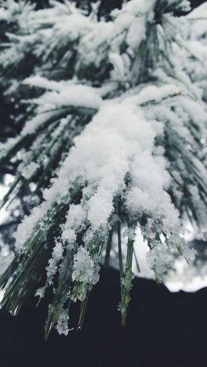 Its christmas time ❄ Christmas Beautiful Snow Christmascheer