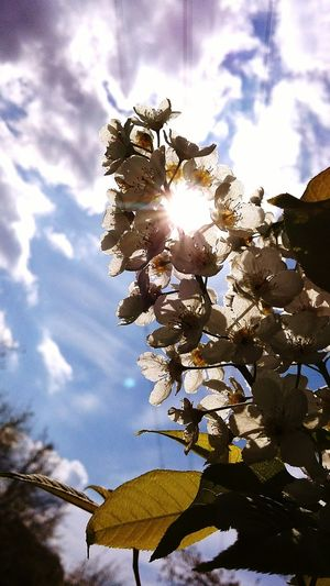 Sunlight Sunshine Nature Plant Sky Freshness Beauty In Nature Leaf Day Outdoors No People