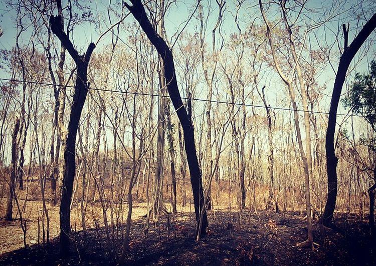 Kemarau Hutan Jati Badegan Ponorogo