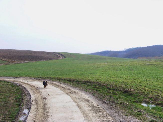 Green Field Walking Dog Hanging Out Enjoying Life Town Nature