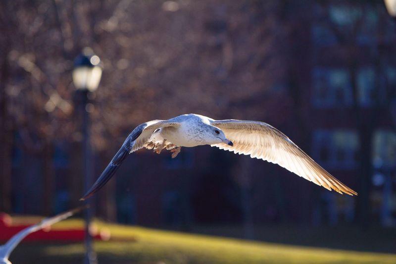 Close-up of bird flying at park
