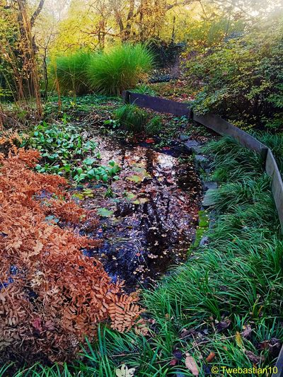 The Autumn Pond