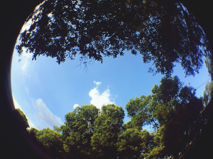 Fisheye Tree Nature Sky Beauty In Nature Tranquility Low Angle View Tranquil Scene No People Day Fish-eye Lens