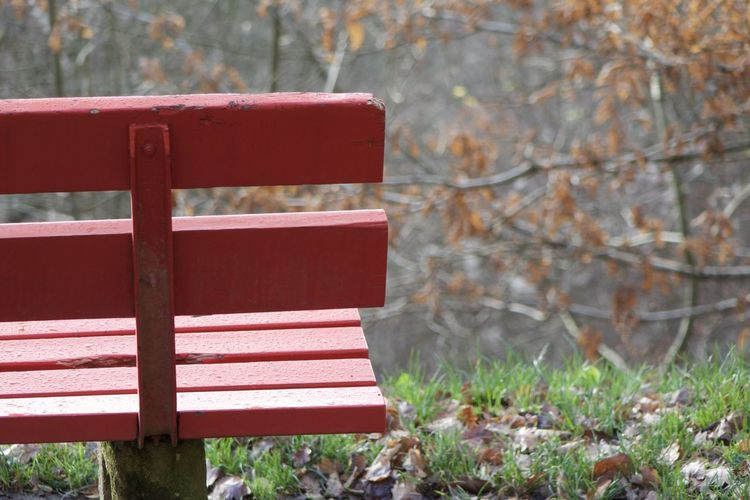 Empty Bench At Park