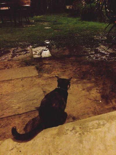 วันสบาย ของแมว ณ อุบลราชธานี