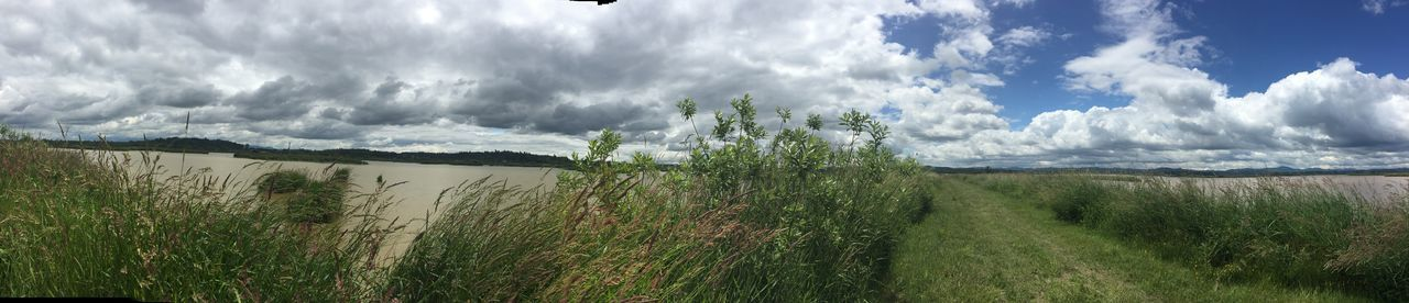 Fern Ridge Refuge Beauty In Nature Cloud - Sky Day Field Grass Growth Landscape Nature No People Outdoors Panoramic Plant Scenics Sky Tranquil Scene Tranquility Water