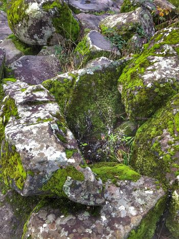Beauty In Nature Outdoors Nature Backgrounds Growth Textured  Close-up Tranquil Scene Scenic View Shapes In Nature  Perspective Layers And Textures Textured  Weathered Natural Condition Landscape Moss Stone Green Color Rock - Object Beauty In Nature Scenics Abstract Nature Background
