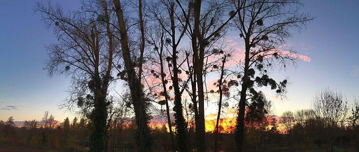 Panorama Panoramic Panoramique  Vue Panoramique Soleil Soleil Couchant Sunrise Charente Dans Ma Ville Panoramique  CIELFIE Skyfie Nature Ciel Sky
