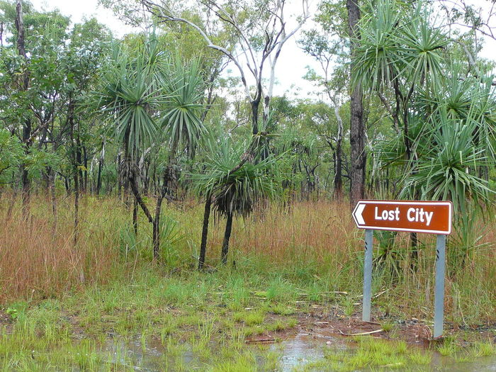 Australia Beautiful Nature Bushes And Trees Litchfield Park Lost Beauty In Nature Communication Day Forest Green Color Growth Jungle Litchfield Litchfield National Park Lost Places Nature No People Outdoors Plant Sauvage Text Tree