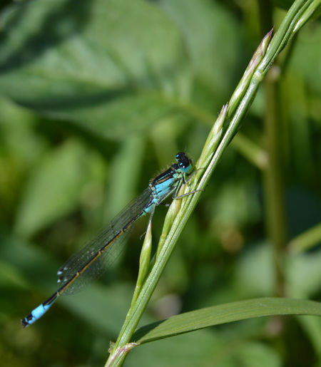 Dragonfly Dragonflies Dragonfly Photograohy Damselfly Close-up Animal Themes Green Color