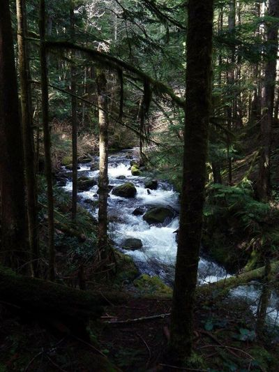Wallace falls Forest Tree Tranquil Scene Nature Tranquility Beauty In Nature Scenics Non-urban Scene Landscape WoodLand Idyllic Moss Tree Trunk Day No People Outdoors Growth Water Sky