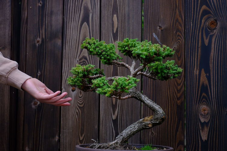 Cropped hand of woman reaching towards plant against wooden wall