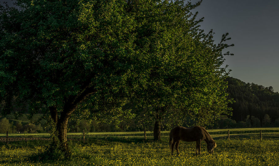 Abendmahl 😋 Nature Graphxart Art Nikon Nikond750 Sunset Sundown Upperaustria Austria Tree Oil Pump Rural Scene Animal Themes Sky Horse Working Animal Pony Farm Animal Domestic Cattle