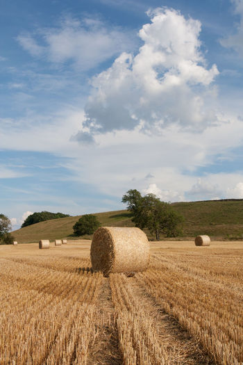 Hay bales in a field North Yorkshire Yorkshire Dales Uk Agriculture Bale  Beauty In Nature Blue Cloud - Sky Day Environment Farm Field Harvesting Hay Land Landscape Nature No People Plant Rolled Up Rural Scene Scenics - Nature Sky Tranquil Scene Tranquility
