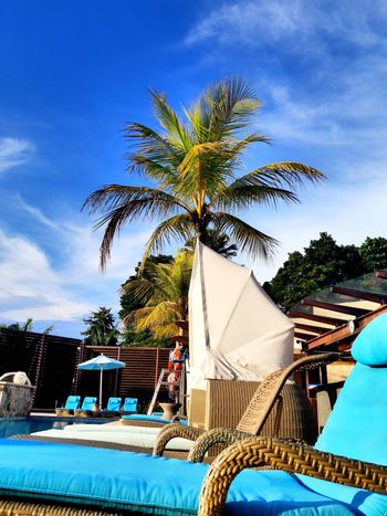 Swimming Pool Coconut Trees No People Summer Sky Outdoors Day