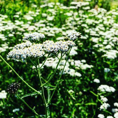 Flowers🌱🌿 Flowers Beutiful  Breathing Space Be. Ready.