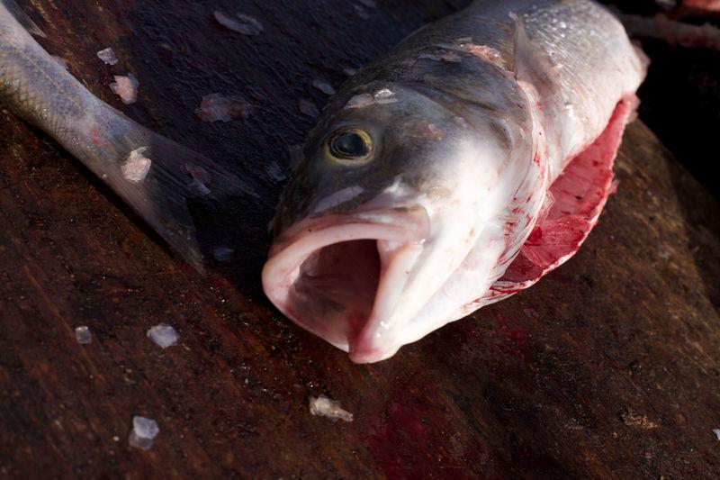 Fish Fishhead Fishing Gutting Fish Sea Bass