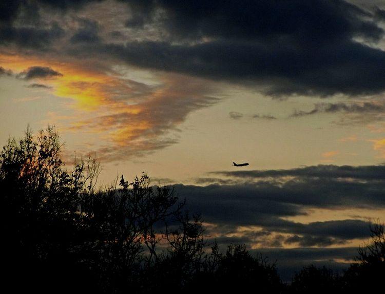 Sunset Flying Sky Cloud - Sky Silhouette Nature Beauty In Nature Transportation Outdoors Airplane No People Tree Day Drone  EyeEm Gallery EyeEm Nature Lover EyeEm The Week On EyeEem Alexander Rolsen / EyeEm