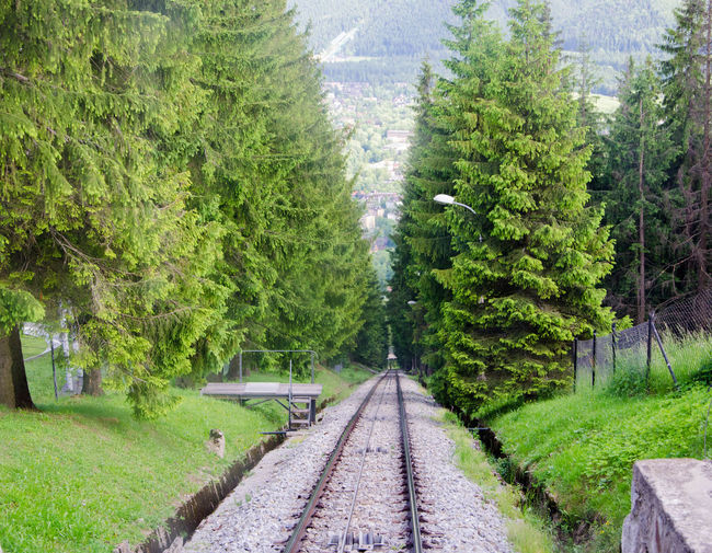 View of railroad tracks amidst trees