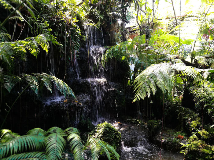 Beauty In Nature Coconut Palm Tree Day Fern Flowing Flowing Water Forest Green Color Growth Land Motion Nature No People Outdoors Plant Rainforest Rock Rock - Object Scenics - Nature Solid Tranquility Tree Water Waterfall