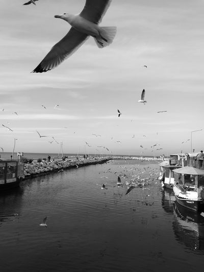 Bird Flying Sky Sea Large Group Of Animals Yalova Yalovasahil Turkey