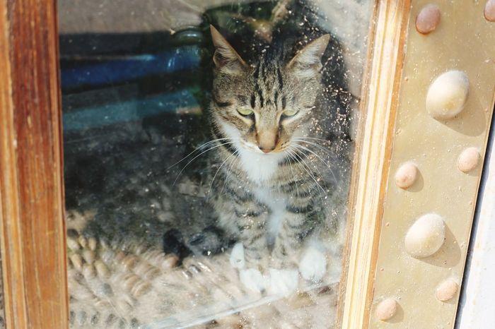 隔着橱窗和我们打招呼的猫咪