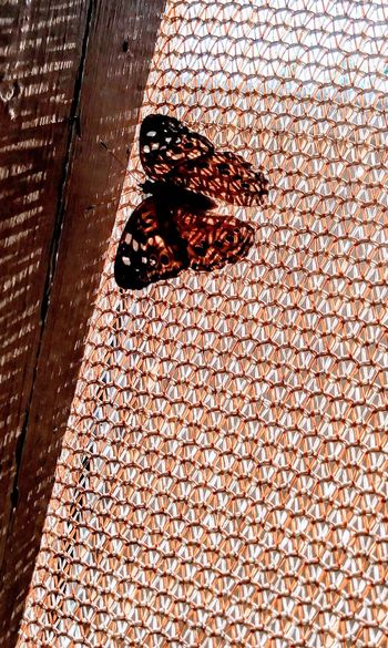Butterfly Nature Love Bugs No People Multi Colored Outdoors Beauty In Nature LoveNature Butterfly World Butterflys. Butterfly ❤ Wings Open Wings; Austin, TX Day Porch Life Porch Butterflys Nature Photography Nature On Your Doorstep Nature Lover Nature_collection Landscape_collection EyeEmNatureLover Austin Texas Summer ☀ Texas Tranquility Perspectives On Nature