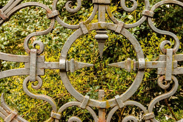 Hedge seen through metallic fence