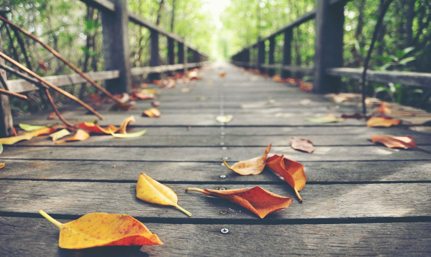 Leaves on wooden footbridge in forest during autumn