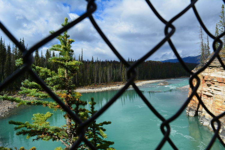 Jasper National Park Jasper Icefields Parkway Athabasca Falls Athabasca River Canada British Columbia Alberta Water Tree Fence Nature Plant Cloud - Sky Lake Barrier Sky No People Boundary Day Beauty In Nature Scenics - Nature Focus On Background Reflection Outdoors