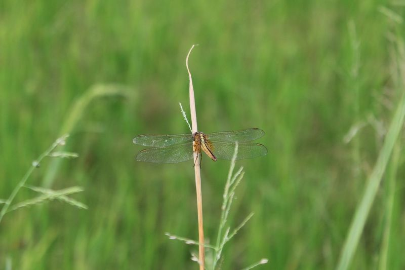 Close-up of dragonfly on grass