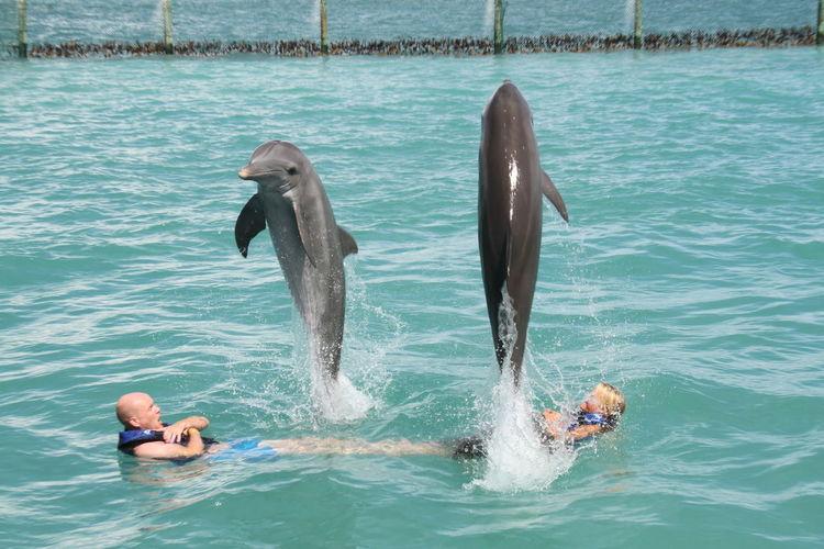 SwimWhitDolphins