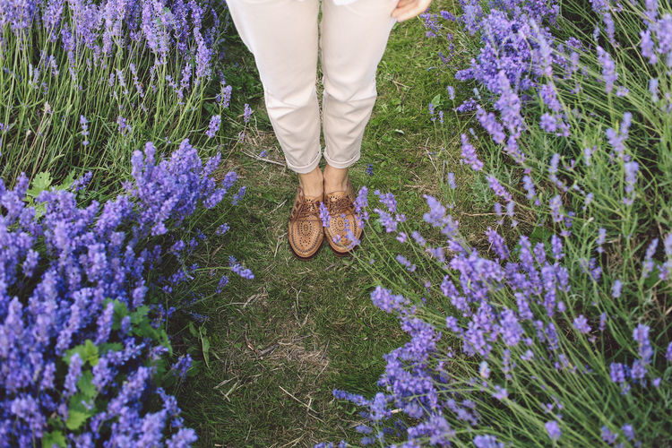 Low Section Of Woman Standing In Lavender Field