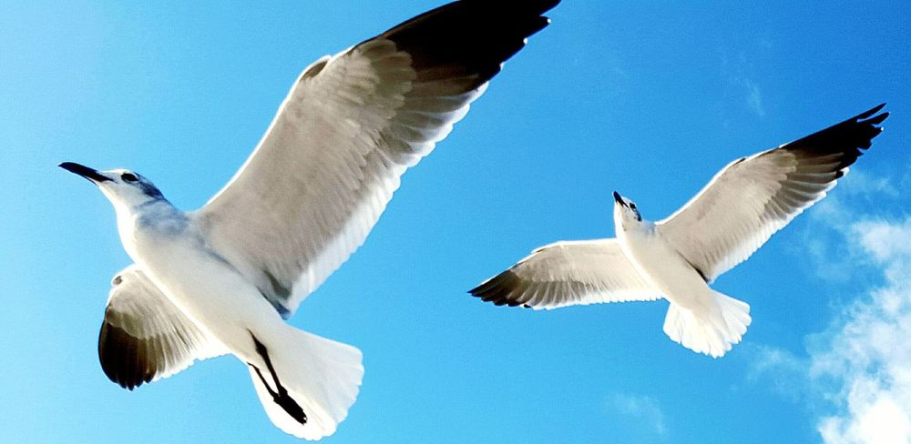 Hanging Out Relaxing Take Flight! Drifting Away Gliding Seagulls And Sea Oceanlife Ocean Waves, Ocean, Nature Beach Photography Seagull Serenity SEAGULL IN FLIGHT Soaring Birds Romantic Relaxing, Photos, Live, Smile Windy Day Sunrise Flying Bird Ocean Breeze Surf