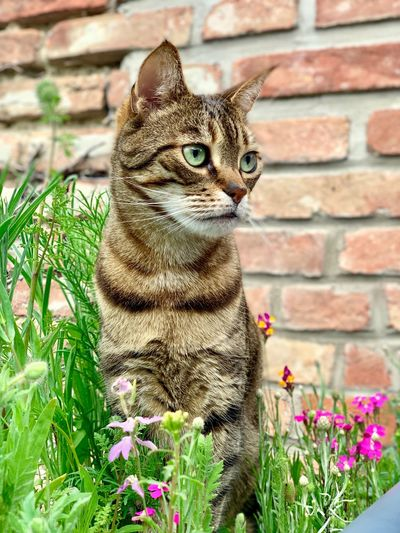 Cat sitting on brick wall