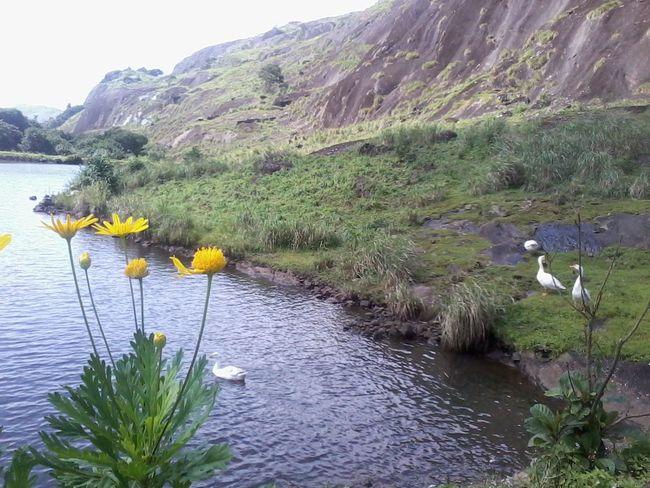 Nature Photography Greenery Mountains Ducks Pure Water Pool Wagamon