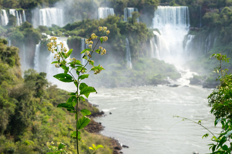 Scenic view of waterfall iguazu
