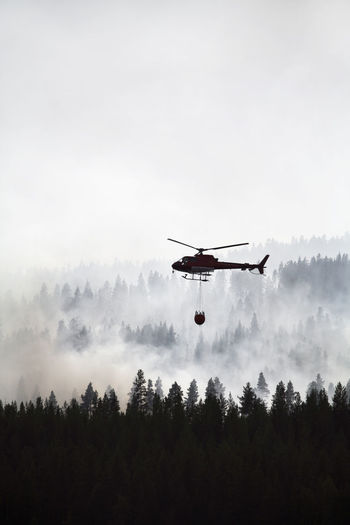 Low angle view of helicopter flying in forest against sky