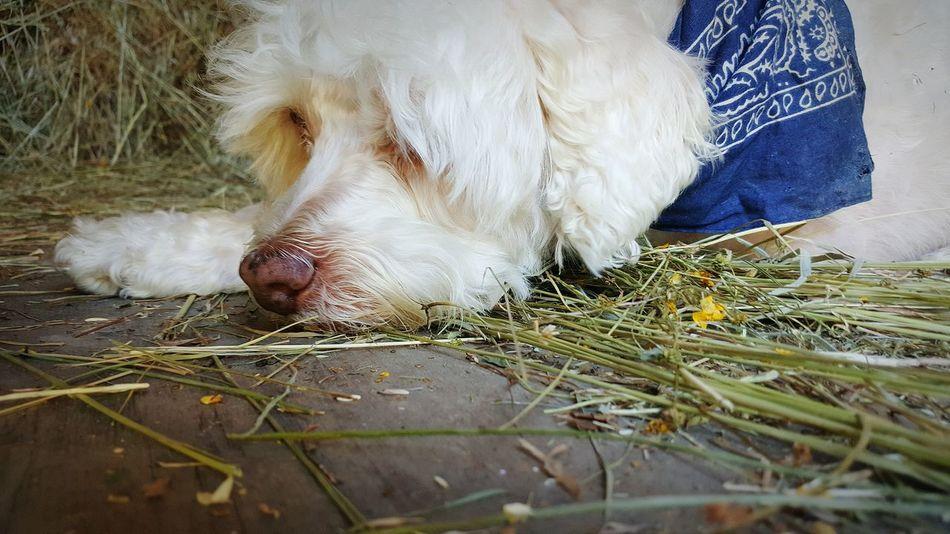 Farm life Ilovemydog Petphotography Animal Photography Dogs Of EyeEm Farm Life Citydog Newlife Simple Moment