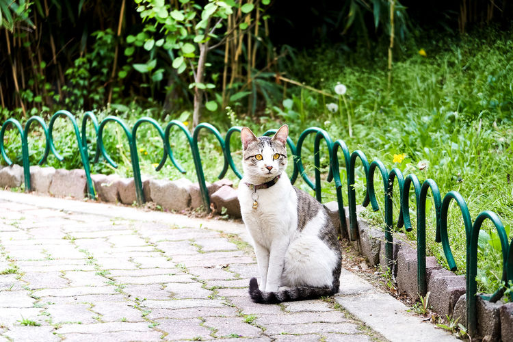 Portrait of cat sitting on plants