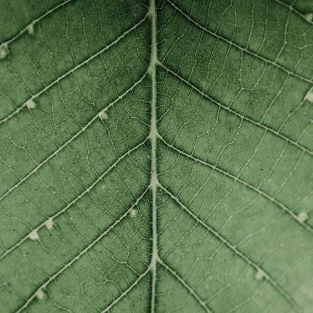 leaf vein structure Backgrounds Close-up EyeEm Best Shots EyeEm Nature Lover EyeEmNewHere Full Frame Green Color Leaf Leaf Vein Leaf 🍂 Leafs Leafs Photography Minimalism Nature Outdoors Plant Sturcture The Great Outdoors - 2017 EyeEm Awards The Street Photographer - 2017 EyeEm Awards The Great Outdoors - 2017 EyeEm Awards EyeEmNewHere