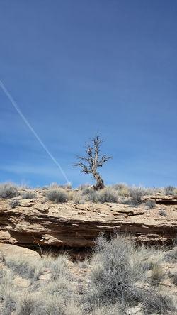 Sky Clear Sky Jemez Pueblo Exploring Nature White Mesa Hiking❤ Desert Landscape Dead Tree Beauty In Nature Blue Sky