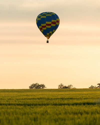 A lone low flying hot air ballon passing over a yellow crop field at sunset. Basket Activity Air Festival Ballon Crop  Farm Farmland Field Flight Floating Golden Hour Hobby Hot Air Ballon Low Angle Low Flying Pattern Sunset Transportation Hot Air Balloon Balloon Sky Flying Plant Beauty In Nature Air Vehicle Environment Landscape Scenics - Nature Land Nature Mid-air Adventure Growth Grass Tranquil Scene Outdoors No People Ballooning Festival