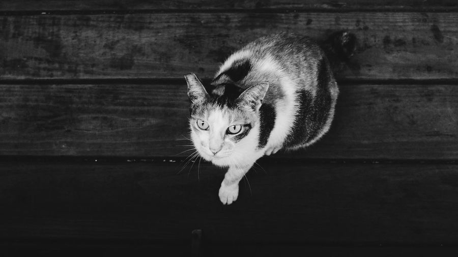 High Angle View Of Cat Sitting On Wooden Floor